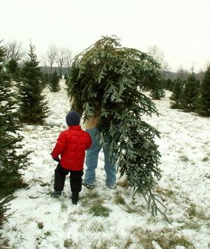 christmas-tree-300uw